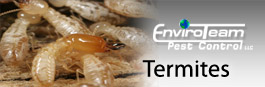 Getting Rid of Termites -EnviroTeam Pest Control